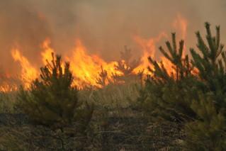 Минприроды и органы местного самоуправления Чеченской Республики занимаются тушением лесных пожаров и надзором в лесах