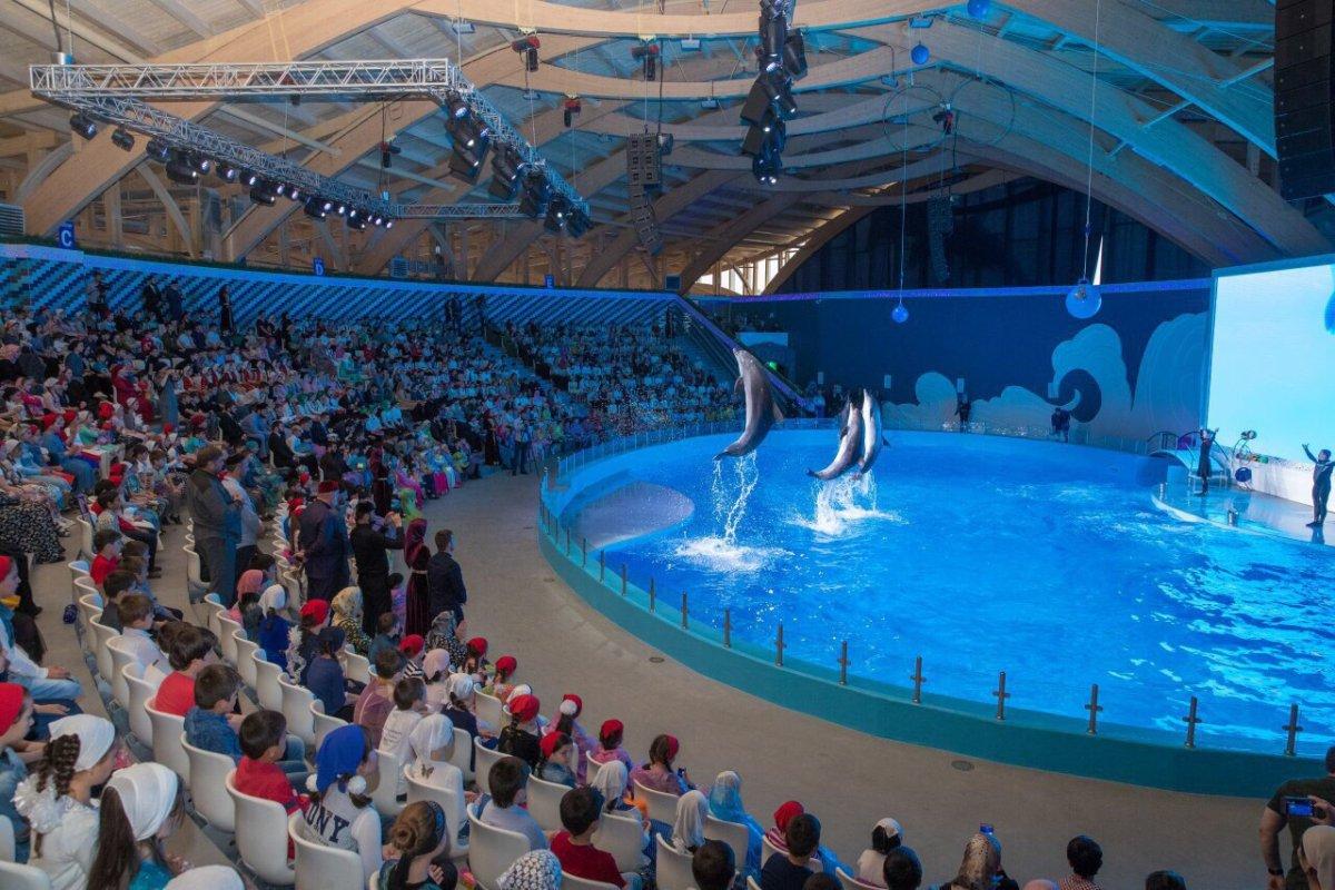В Грозном открылся первый в СКФО дельфинарий